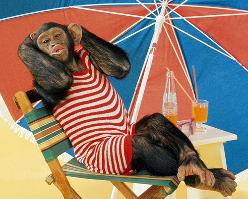 Картинки по запросу смешные картинки про отпуск