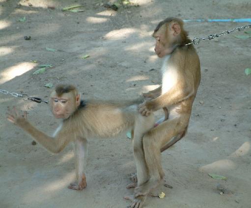 порно фото приматы