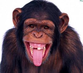 Умные обезьяны, шимпанзе используют орудия, банан положили перед клеткой в  которой сидел шимпанзе, бывает что обезьяна не находит простого решения  поставленной перед ней задачи, эксперимент с ящиками показывает весьма  важный предел возможностей